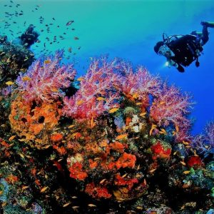 Sharm El Sheikh Holiday best imaages for diving in red sea