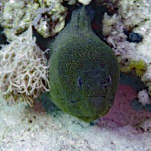best scuba diving mars alam