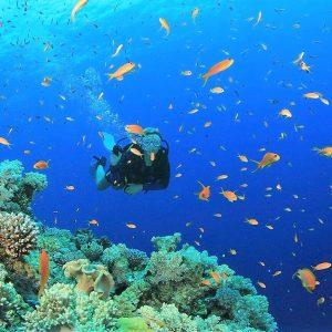 best sharm el sheikh diving spots images