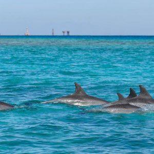 dolphin trip hurghada