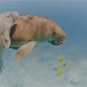 marsa alam scuba didving