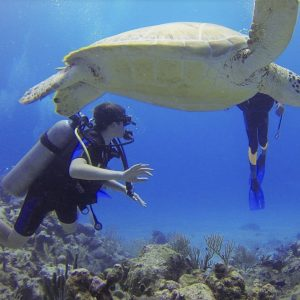 scuba diving sharm elsheikh