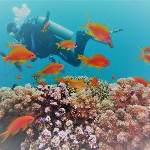 sharm el sheikh scuba diving best images