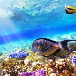 coral reef in sharm el sheikh