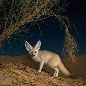 desert of egypt white desert