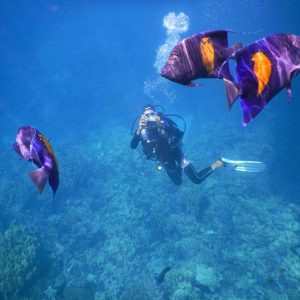 look at egypt tours red sea holidays