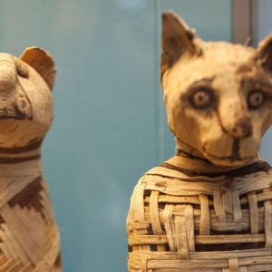 mummies of the animals of ancient egypt (2)