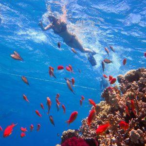 scuba diving egypt tour