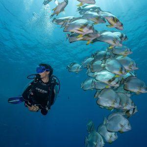 sharm el sheikh diving best tour