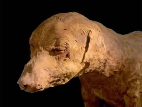 Dog Mummy in Egypt