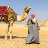 Travel Safety in Egypt , Best Cairo Tour ,Cairo Sightseeing with Dinner Cruise & Pyramids Show