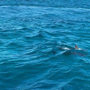 dolphin red sea hurghda
