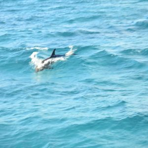 Best Hurghada Day Trip Excursion -Hurghada Dolphin House and Banana Boat & Snorkeling.