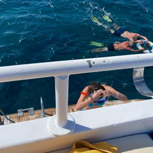 dolphin trip egypt