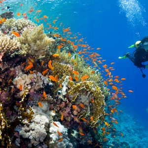 Snorkeling & Diving Trip in Ras Muhamed National Park | Best Diving Trip