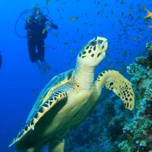 sharm elsheikh diving