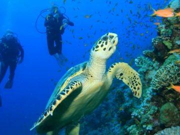 Snorkeling & Diving Trip in Ras Muhamed National Park