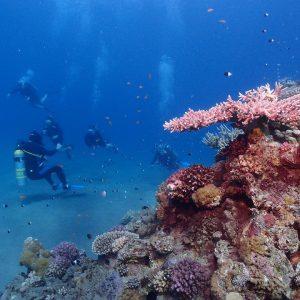 sharm elsheikh diving best