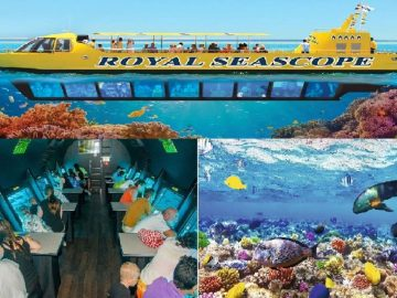 Hurghada Submarine Tour -Discover the Marine Life of the Red Sea