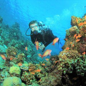 best of egypt scuba diving sharm elsheikh