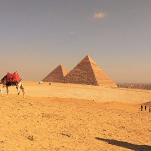 pyramids of Giza with camels